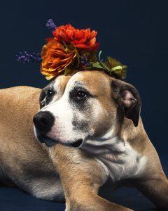 little dog big flowers
