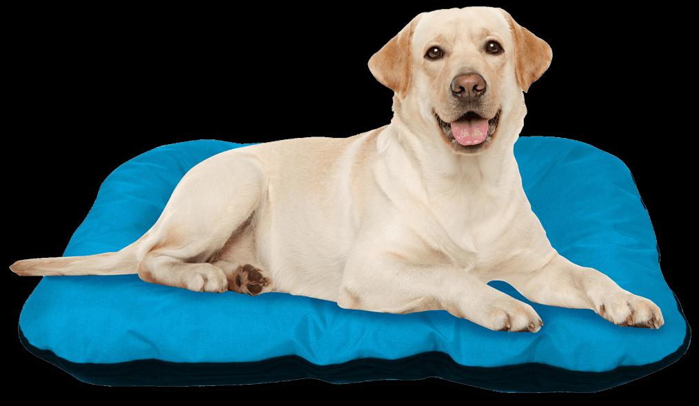letto per cani